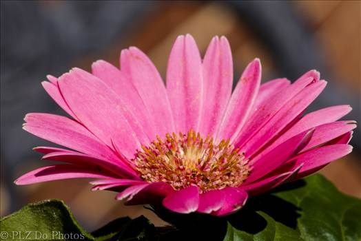 PINK A BLOOM -
